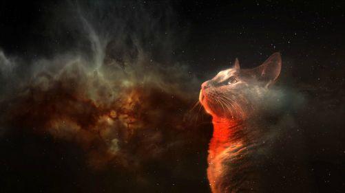 spacecat_03